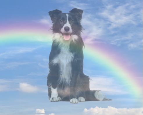 dealing with pet loss Entrusted Pets